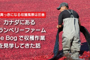 thebog-cranberry-farm
