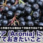 aronia-black-chokeberry